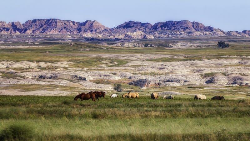 荒地牧场地 库存照片