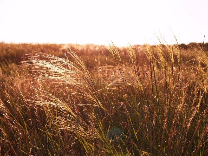 荒地草本美丽的景色夏天 免版税库存照片