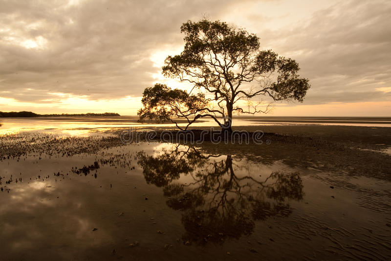 荒芜结构树 图库摄影