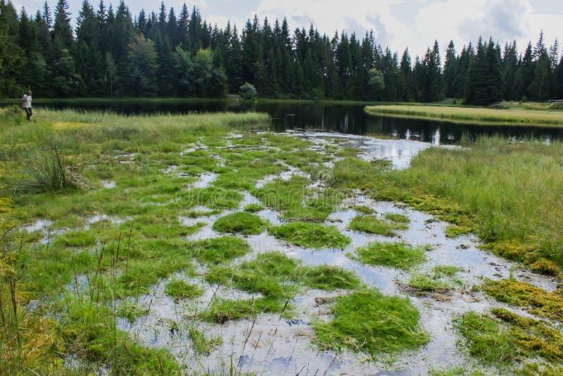 荒野和湖 库存照片