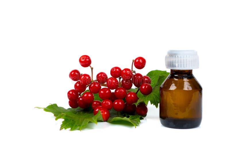 荚莲属的植物在小玻璃瓶的莓果不老长寿药 库存照片