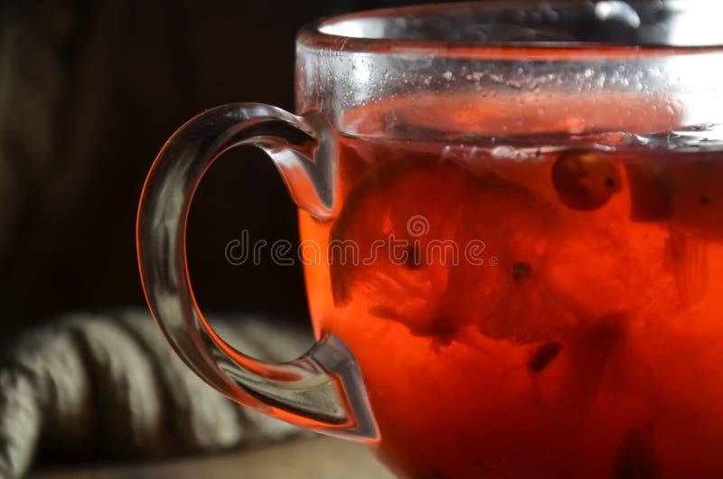 荚莲属的植物自创炽热茶用柠檬和蜂蜜在一个玻璃杯子 免版税库存照片