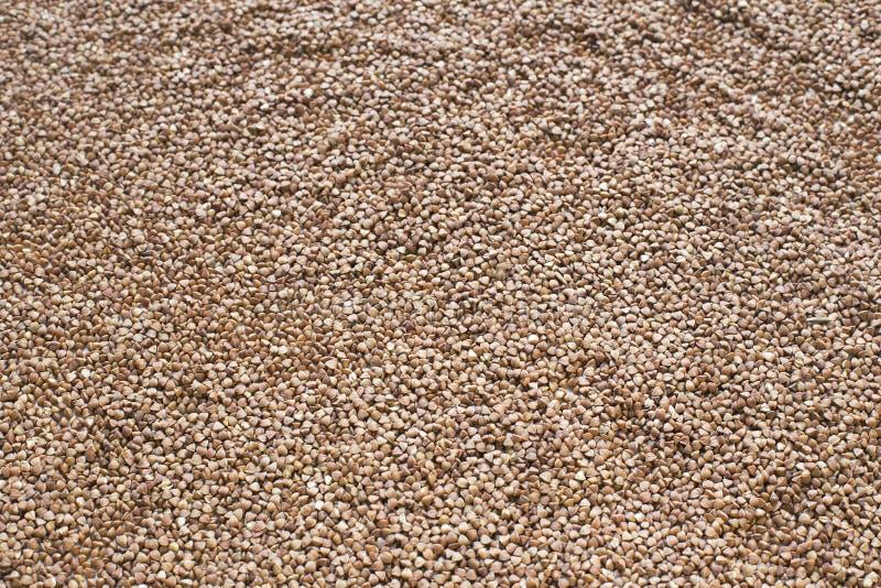 荞麦棕色背景 图库摄影