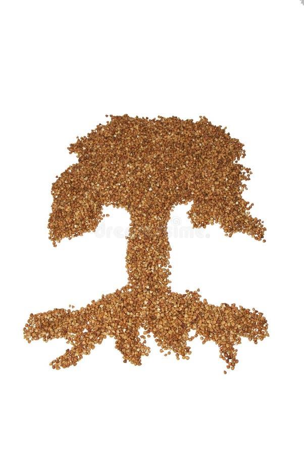 荞麦结构树 免版税库存图片