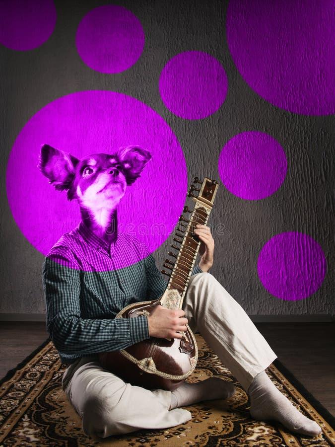 荧光的狗演奏锡塔尔琴 滑稽的拼贴画 r 库存照片