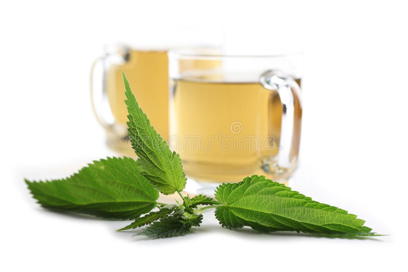 荨麻茶 免版税库存图片