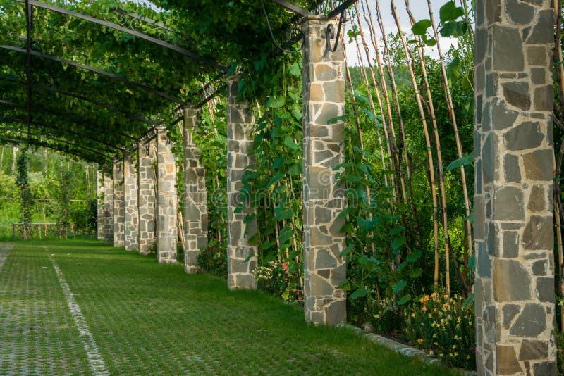 荫径庭院-拱道在用上升的葡萄盖的庭院里 库存图片