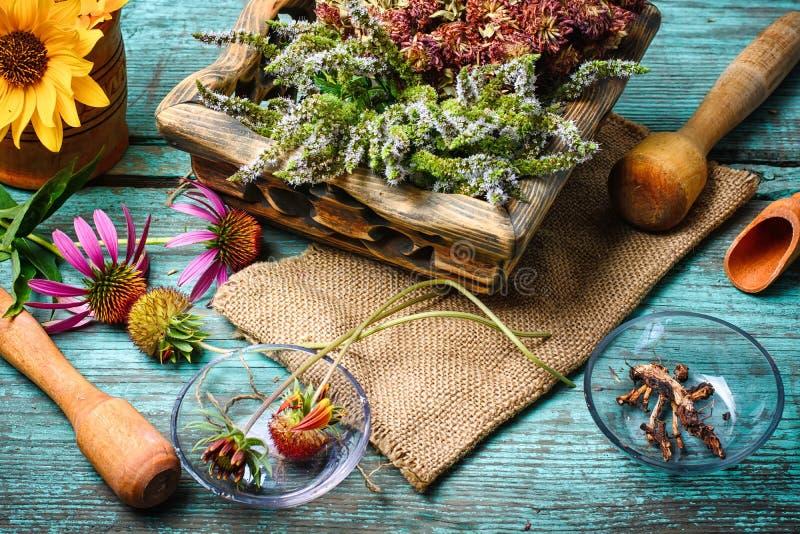 药用植物收获  图库摄影