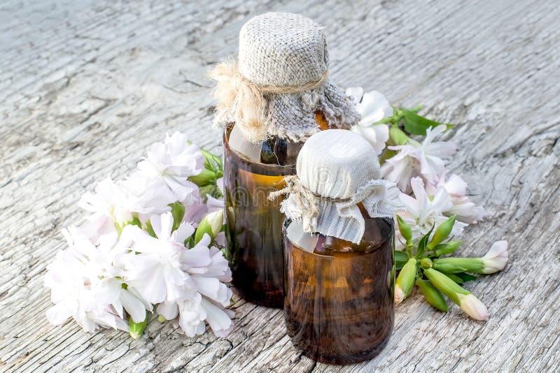 药用植物肥皂草officinalis和配药瓶 免版税库存照片