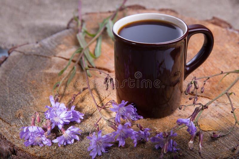 药用植物苦苣生茯:花 植物的根使用作为咖啡的一个替补 从苦苣生茯的饮料在a 库存图片