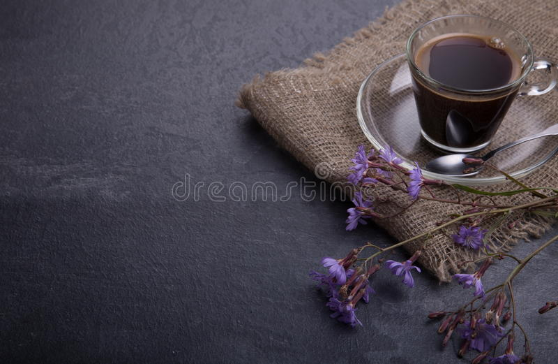 药用植物苦苣生茯:花 植物的根使用作为咖啡的一个替补 从苦苣生茯的饮料在a 免版税图库摄影