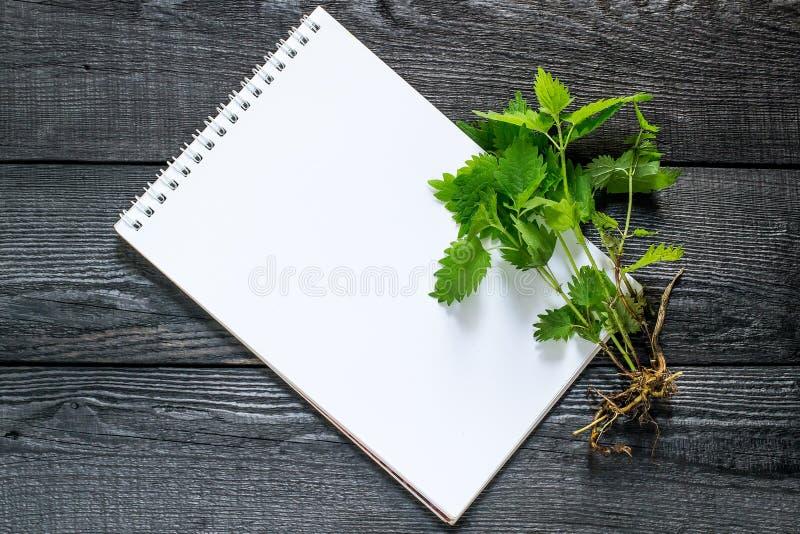 药用植物荨麻荨麻属dioica和笔记本 免版税库存照片