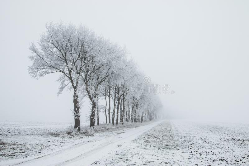 荷兰、风景和磨房冬天 免版税库存图片