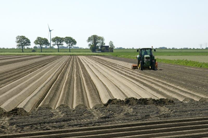 荷兰农夫做在cropland的土豆土坎 免版税库存照片
