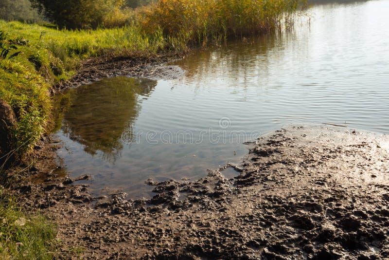 荷兰湖的泥泞的岸的特写镜头在低清早 库存照片