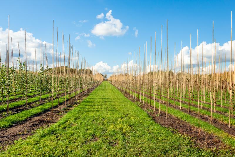 荷兰苗圃场在秋天季节的一好日子 图库摄影