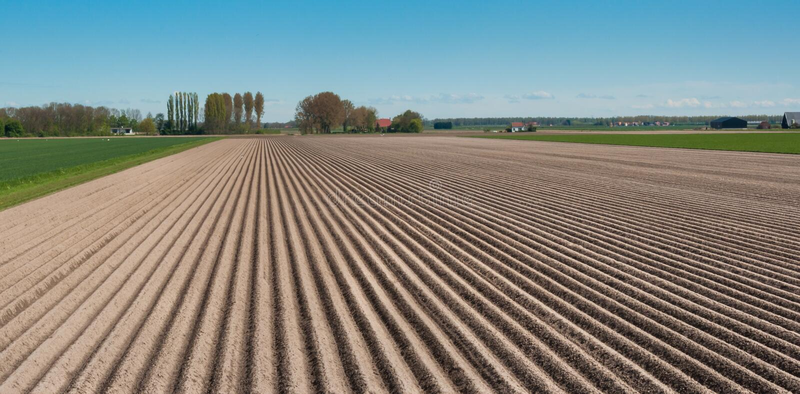 荷兰语横向排行农村土壤 库存照片