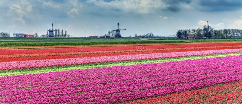 荷兰语横向 免版税库存照片