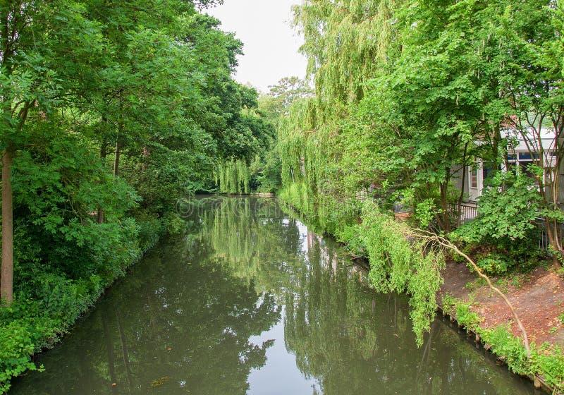 荷兰运河 两边的树,触水的绿叶 免版税库存照片