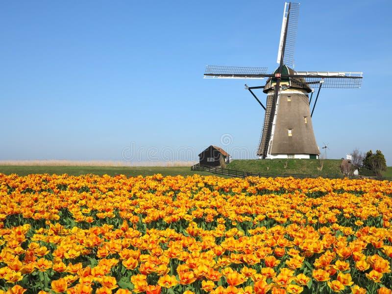 荷兰郁金香风车风景 免版税库存图片