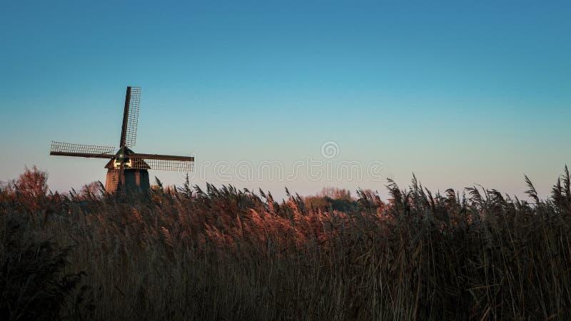 荷兰阿尔克马尔郊区的风车! 库存照片