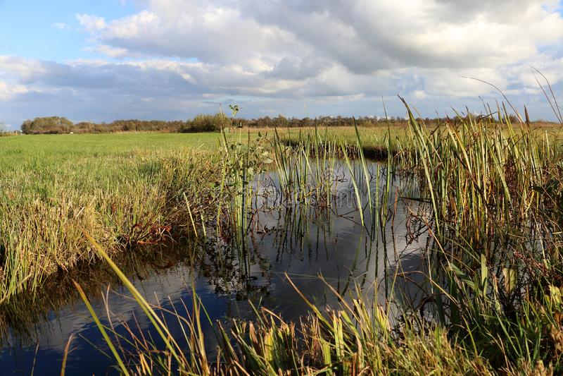 荷兰风景在上艾瑟尔省 免版税库存照片