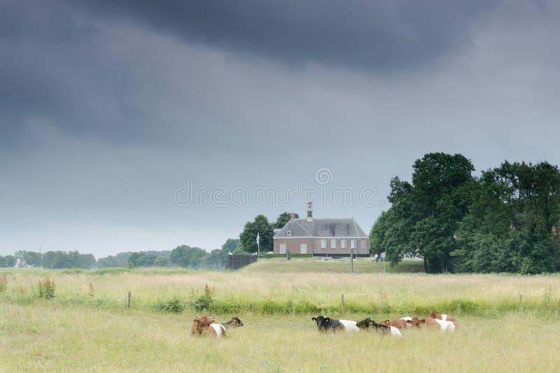 荷兰风景的,在Emmeloord附近的东北圩田一点教会 库存图片