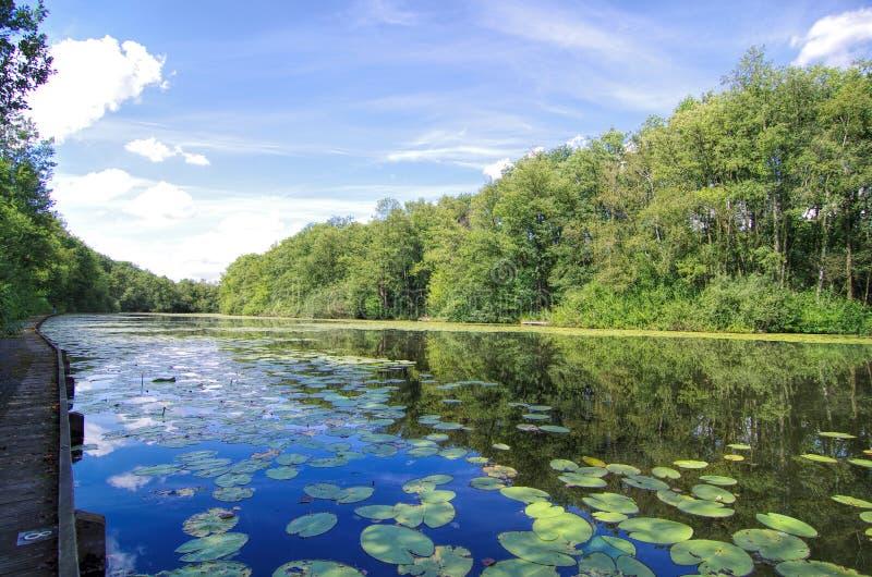 荷兰Waterland 库存图片