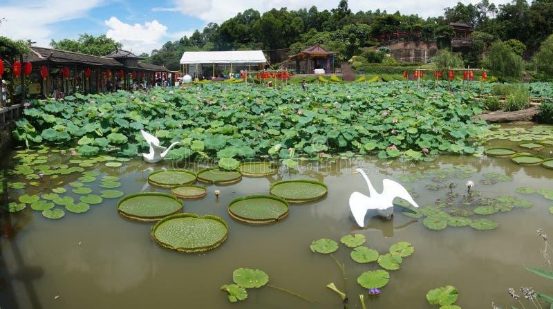 荷花池在中国庭院里 库存照片