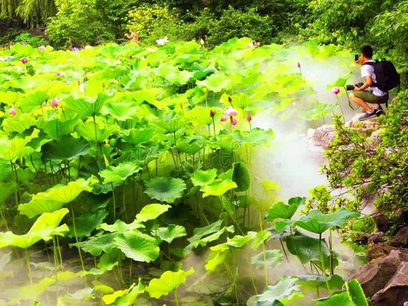 荷花池片断在古邑庭院里面的 库存图片