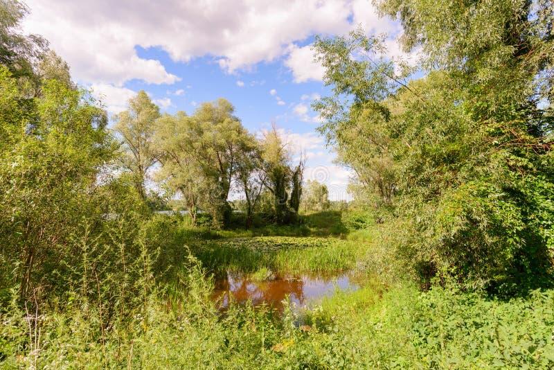 荷花盖的池塘 库存图片