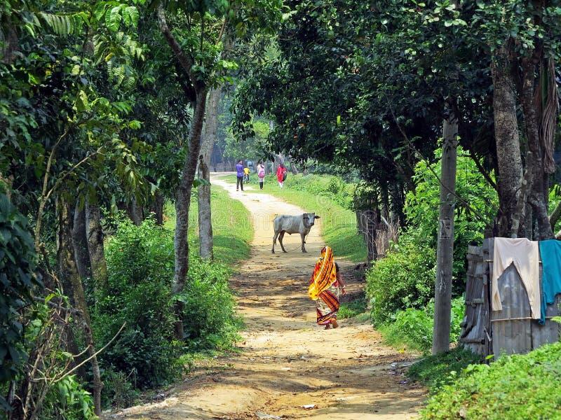 莎丽服的妇女步行沿着向下路, Srimangal,孟加拉国的 免版税库存图片