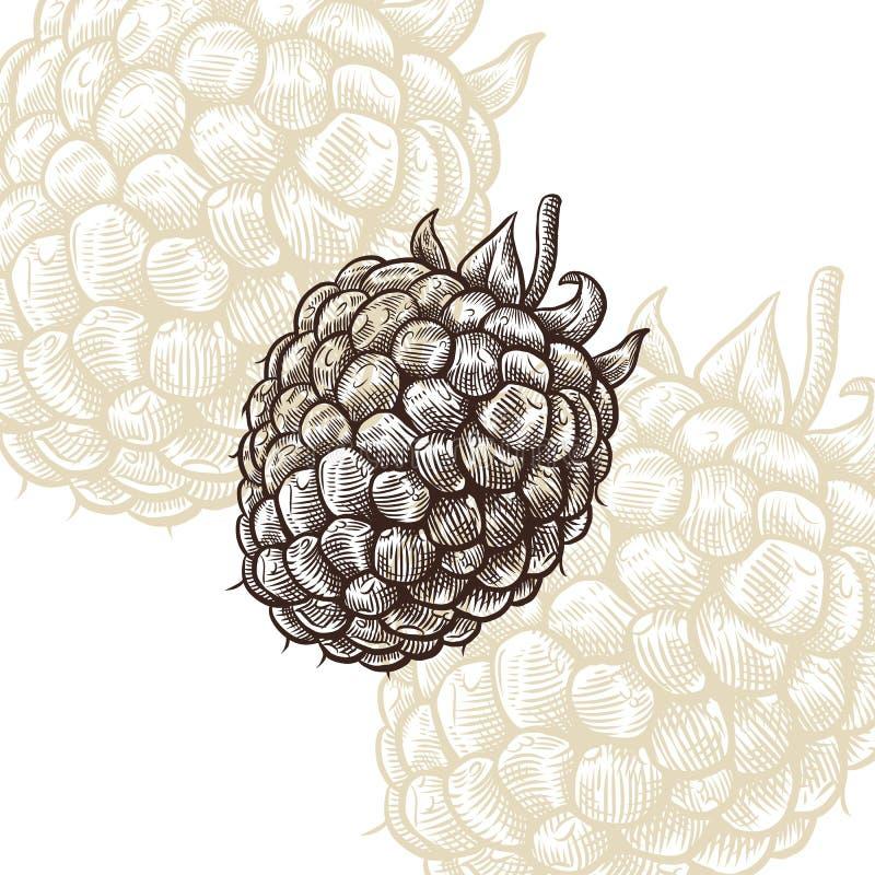 莓凹道板刻传染媒介例证 免版税库存图片