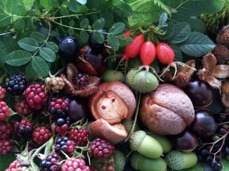 黑莓口味  库存照片