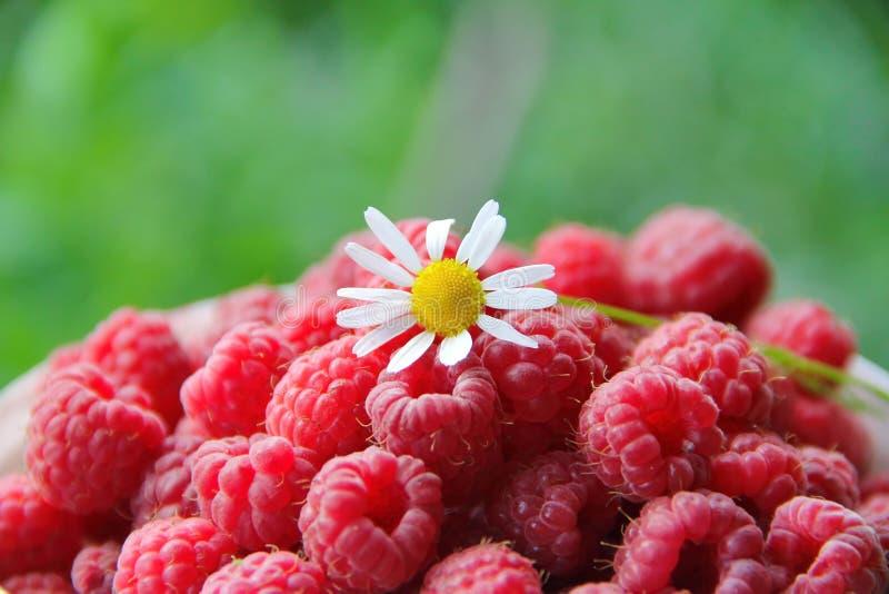 Download 莓和春黄菊 库存照片. 图片 包括有 果子, 蔬菜, 成熟, 庭院, 制动手, 收获, 春黄菊, 夏天, 红色 - 72357304