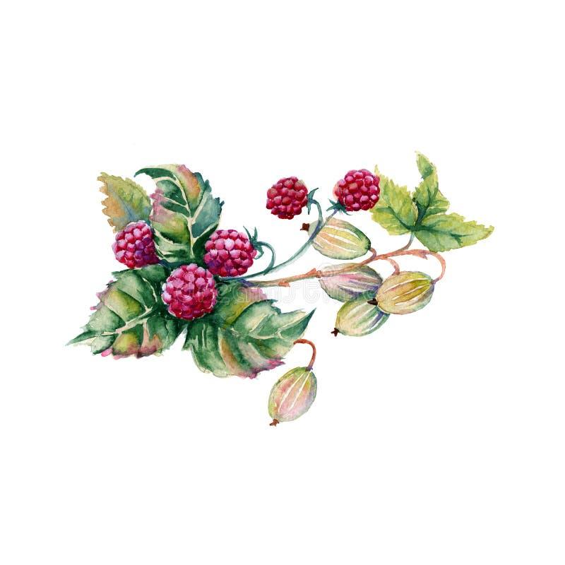 莓和鹅莓莓果在花束 背景查出的白色 向量例证