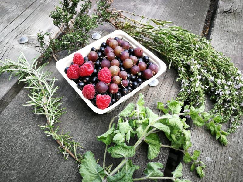 莓果和草本,莓,鹅莓,黑潮流,薄菏,迷迭香 免版税库存照片
