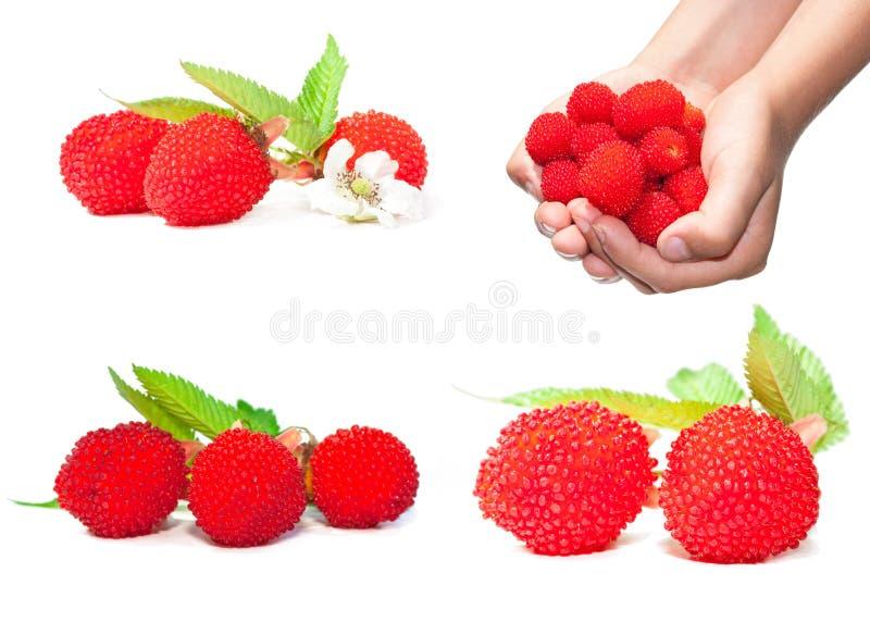 莓果映象集 免版税库存照片