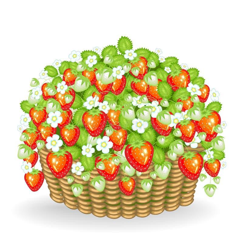 莓果灌木在篮子增长 成熟,水多,可口草莓 有用的维生素和微型元件的来源 ?? 向量例证