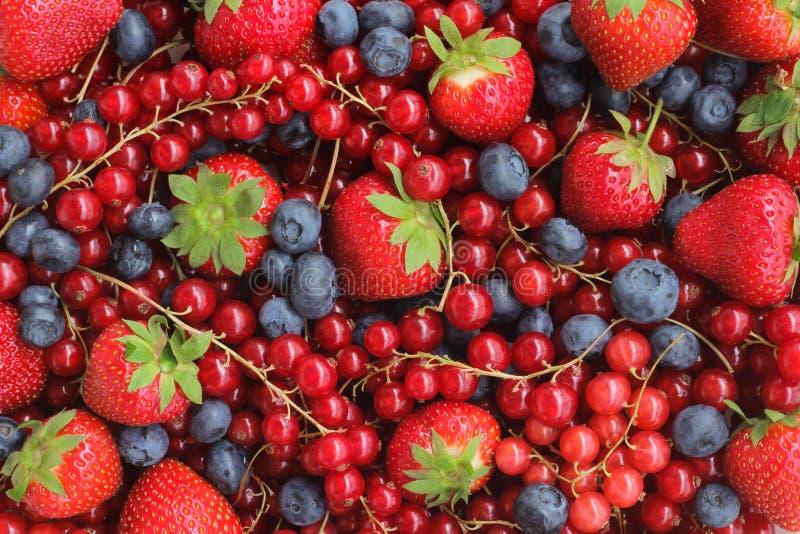 莓果背景 图库摄影