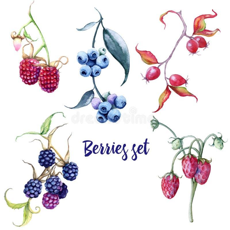 莓果集合 野玫瑰果和蓝莓黑莓草莓莓鹅莓樱桃 向量例证