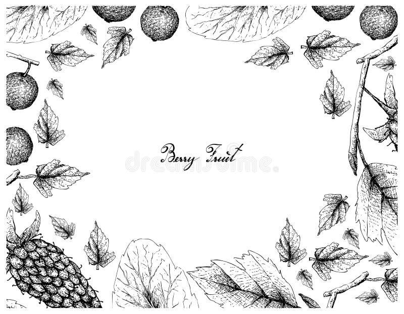 莓果,印度手拉的剪影可口新大杨莓的例证框架和马达加斯加的李子或者的大风子科 库存例证