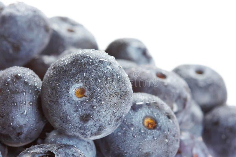 莓果 免版税库存照片