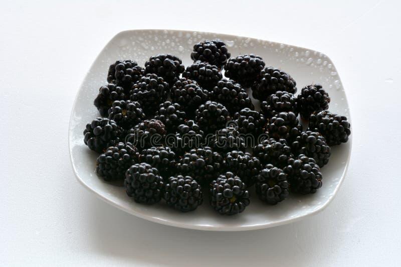 黑黑莓特写镜头 免版税库存图片