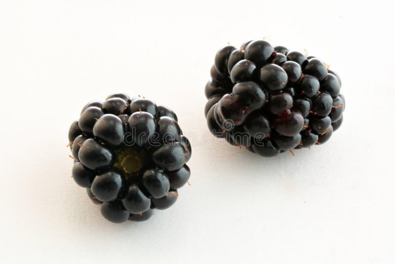 黑黑莓特写镜头 库存图片