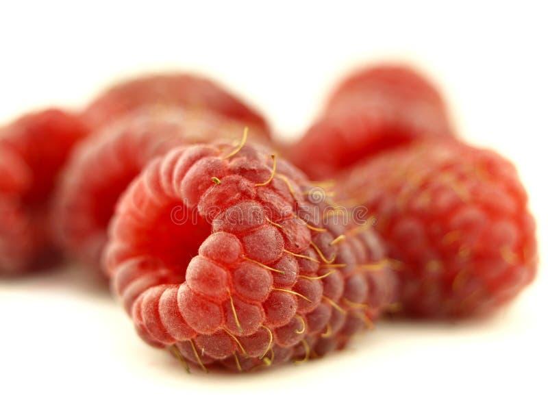 莓缩放 库存图片