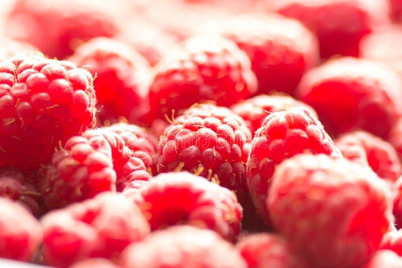 莓背景 图库摄影