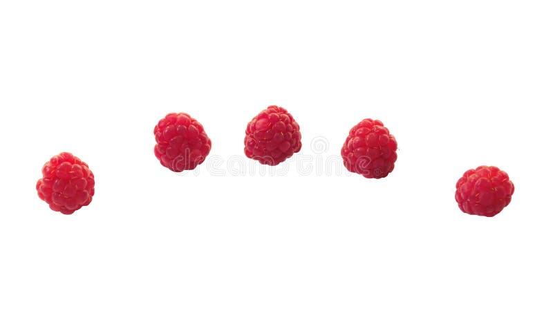 莓莓果和春黄菊花 冷的治疗 ethnoscience 库存照片