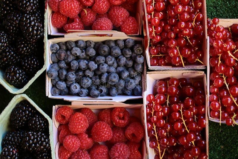 黑莓蓝莓莓红浆果 免版税库存图片
