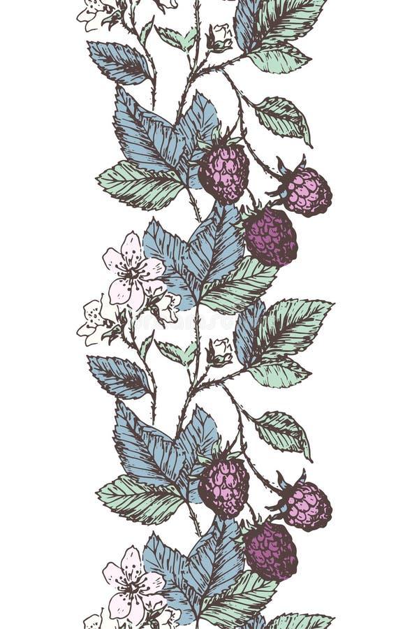 黑莓边界 皇族释放例证